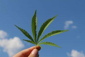 Whittier Daily Greens Cannabis Dispensary