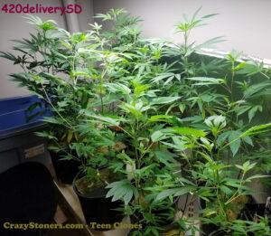 420deliverySD